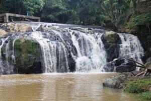 Câmara de Vereadores de Rio Bonito aprova leis de incentivo à proteção do meio ambiente