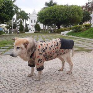 Cachorro Zé Pereira deve ganhar estátua na Praça Fonseca Portela, no Centro de Rio Bonito