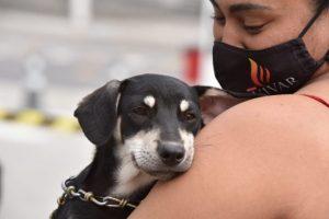 Prefeitura de Maricá realiza a 5ª edição da Campanha de Adoção de Cães e Gatos