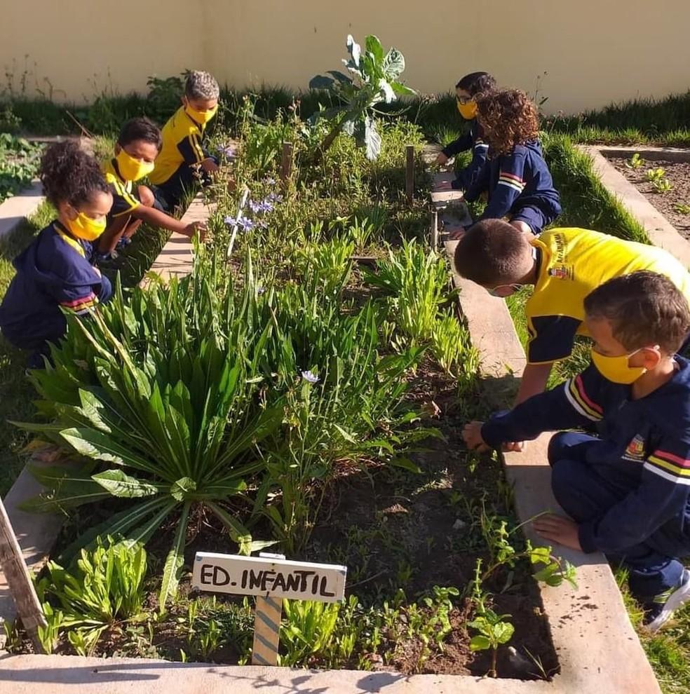 Alunos de escolas ecológicas aprendem a cuidar da natureza e cultivar alimentos orgânicos em Araruama